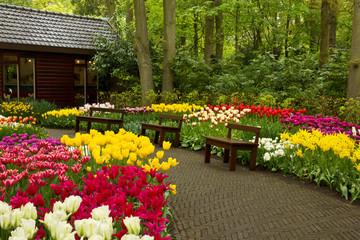 spring garden Keukenhof, Holland