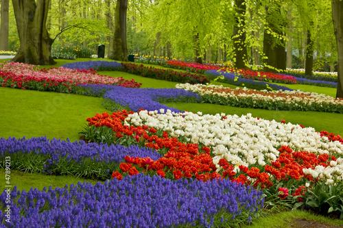 Naklejka spring flowers in holland garden