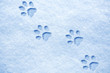 Leinwandbild Motiv cat paw tracks on the snow