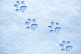 cat paw tracks on the snow