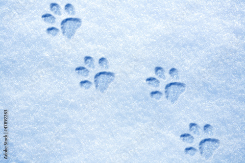 cat paw tracks on the snow - 47892263