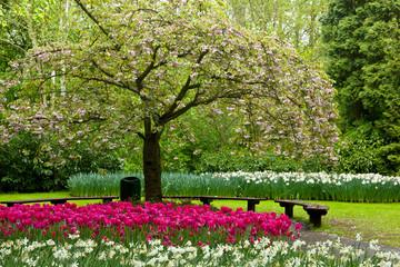 spring blooming tree in garden