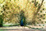 Fototapeta piękny - uroda - Ptak