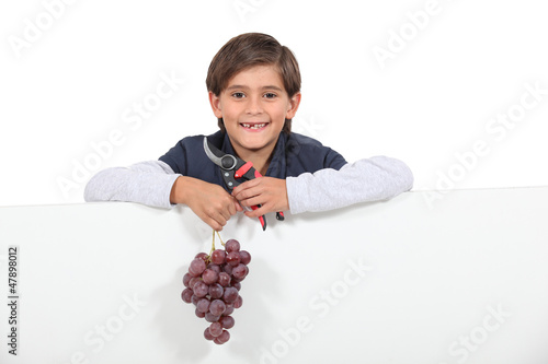 Boy holding a bunch of grapes and shears