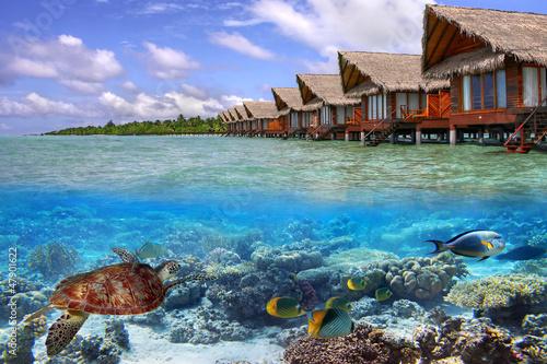 Leinwanddruck Bild Green turtle in the tropical water of Maldives