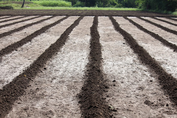 Agricultural field ploughed,