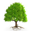 a very big green tree