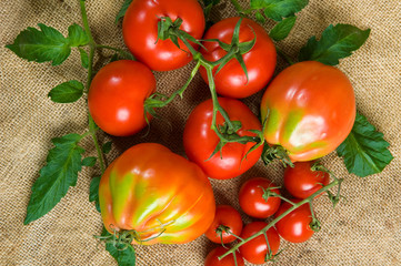 different tomatoes