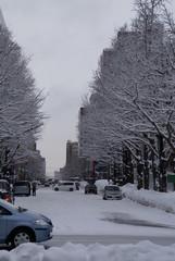 雪景色の並木通り