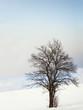 canvas print picture - einsamer Baum 44, im Winter
