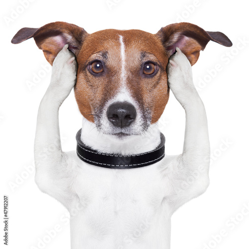 covering ears dog