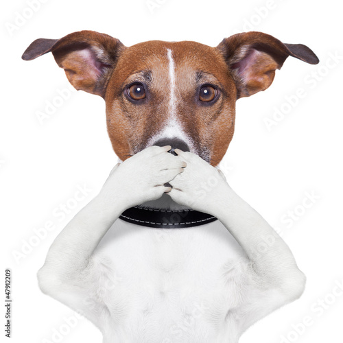 canvas print picture covering mouth dog