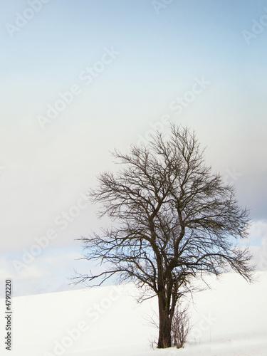 canvas print picture einsamer Baum 44, im Winter