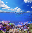 Underwater exotic life