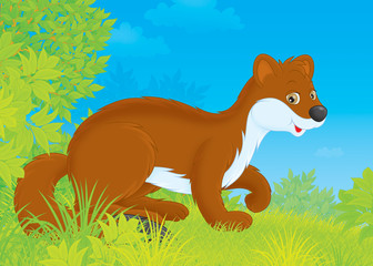 stoat walking in a forest