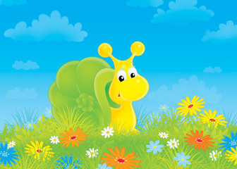 snail in green grass among field flowers
