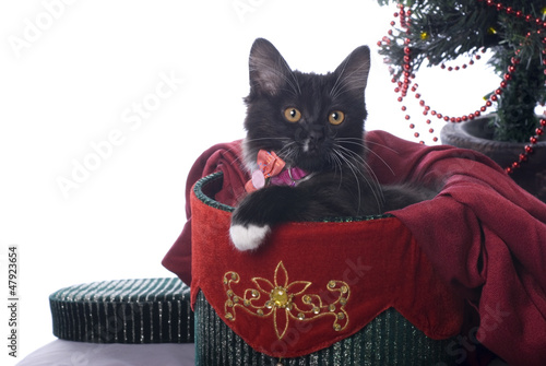 Black Kitten in Christmas Gift Box on White