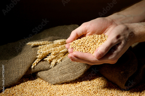 man hands with grain, on brown background