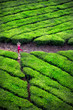Yoga in tea plantations