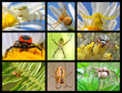 Nine photos mosaic of spiders