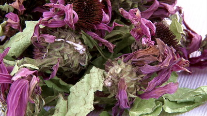 Echinacea dried flowers, tea