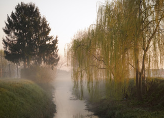 Misty morning along a creek