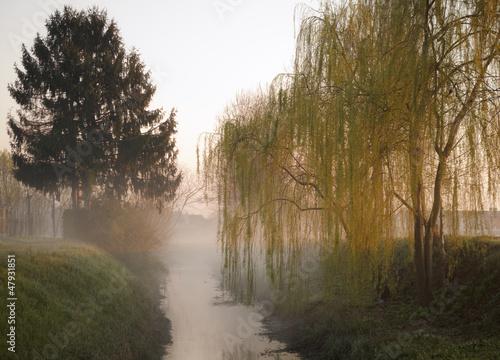 Fototapeten,nebelfront,nebel,winter,herbst