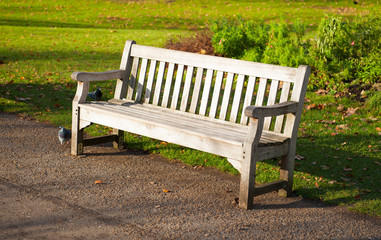Stylish wooden bench in a park