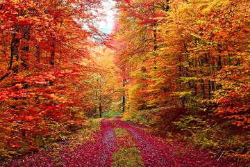 Farbenprächtiger Herbstwaldweg im Oktober