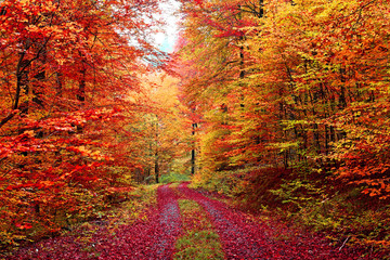 Farbenprächtiger Herbstwaldweg im Oktober © fotozick