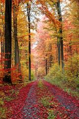 Herbstwaldweg im Oktober © fotozick