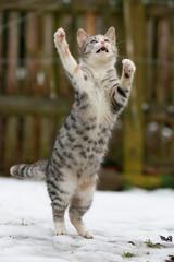 Katze stehend im Schnee