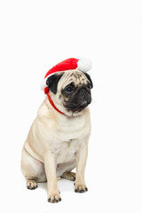 Cute pug wearing a red Santa Hat