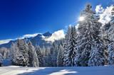 Fototapety Verschneiter Tannenwald
