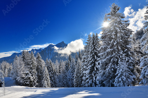 Fototapete Winter Alpen Wald Winterurlaub Pixteria