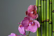 spa concept-branch pink orchid and bamboo stem on zen pebble