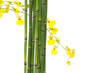 Spa creation concepts-thin bamboo grove and yellow orchid