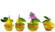 Vitamine, Obst: Bunte Frucht-Kompositionen