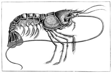 Shellfish - Crustacé - Krustentier