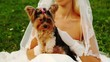 bride sits on grass in white dress and irons small terrier
