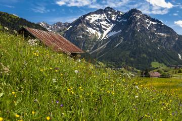 Sommerblumenwiese im Kleinwalsertal in Österreich