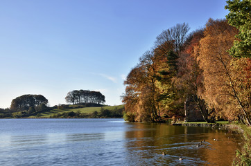 Trees at Talkin Tarn, on an Autumn day.