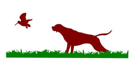 Cane da caccia in ferma su beccaccia