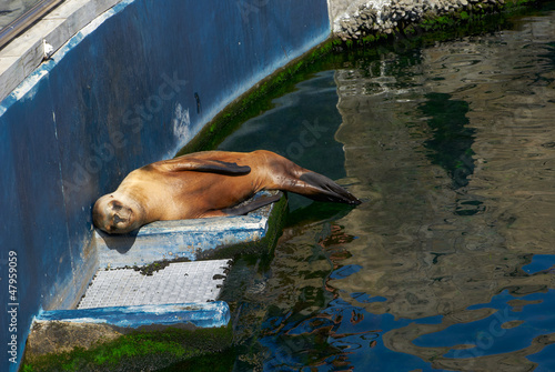 The sea lion in zoo sleeping