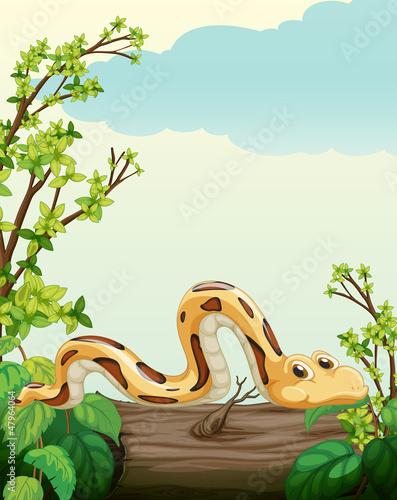 A snake on tree