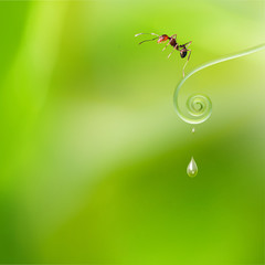 orange ant transparent ant walking on dew drop branch of tree