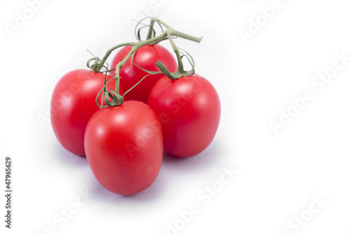 Tomatoes with vine isolated on white