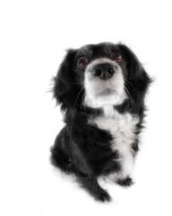 dog on a white background