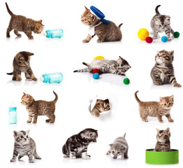 collection of kitten isolated on white background.
