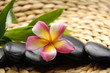 Massage stones and orchid with green plant on woven mat